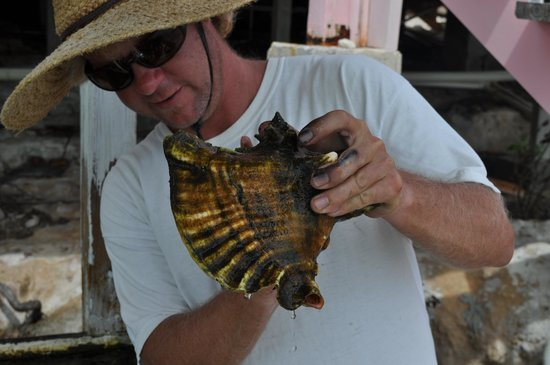 Caicos Conch Farm: The Conch up-close and personal