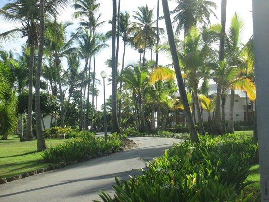 Grand Palladium Palace Resort Spa & Casino : Well kept hotel grounds