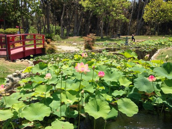 Japanese Garden Picture Of Kenneth Hahn State Recreation Area Los Angeles Tripadvisor