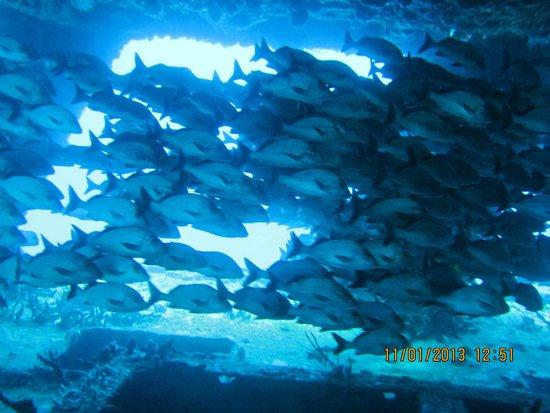 Scuba Diving Cancun : Inside the C-58 Mine Sweeper 85' deep wreck dive