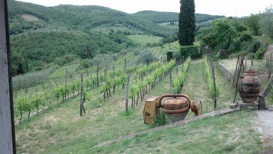 A Slow Day in Tuscany : Beautiful local vineyard