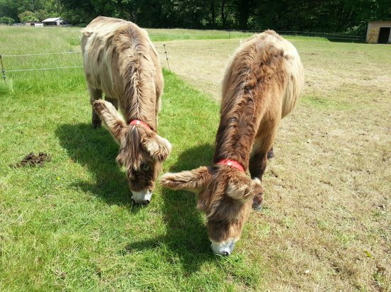 The Donkey Sanctuary: The grass is always greener on the other side