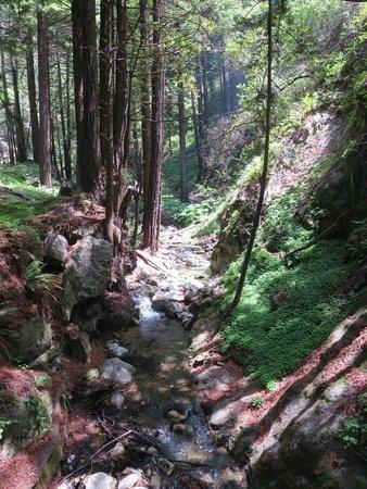 Limekiln State Park: Redwoods