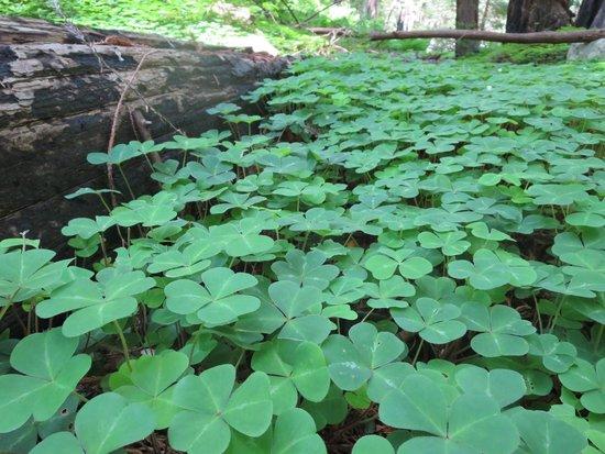 Limekiln State Park: Lush Greenery