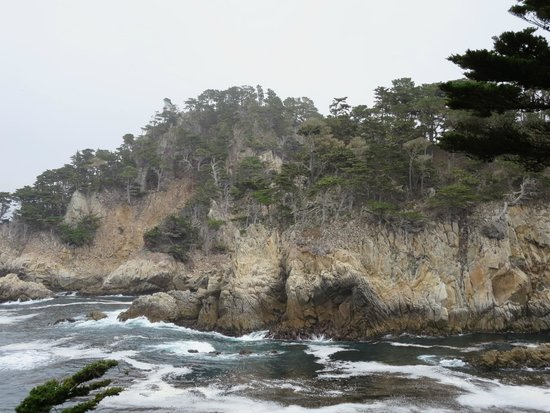 Point Lobos: Cypress Trees