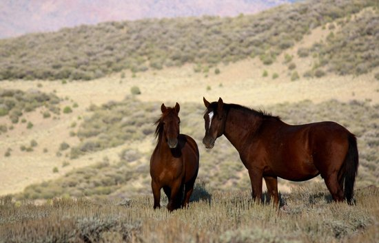 Wild Horse Safaris: Wild horses roam throughout the valley and nearby mountains