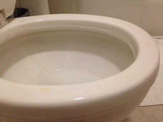 Astor on the Park: pee on toilet