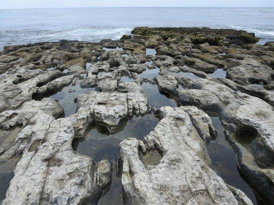 Natural Bridges State Beach Tide Pools