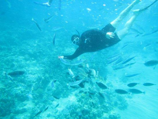 Snuba Tours Of Oahu