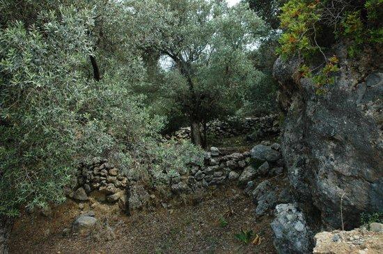 Eleonas: beautiful grounds