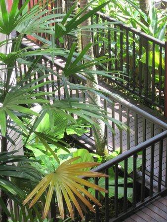 Hibiscus Resort & Spa : Tropical walkway to room