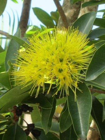 Hibiscus Resort & Spa : Beautiful tropical flora