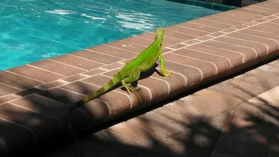 Pier House Resort & Spa : Visitor at pool