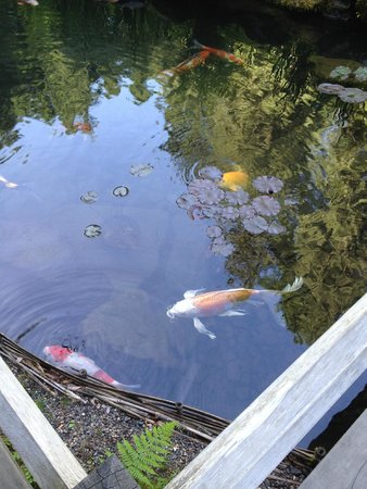 Portland Japanese Garden: The Koi