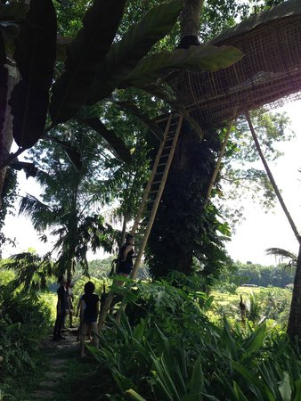 Bambu Indah: THE TREE HOUSE