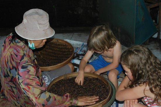 Sanak Retreat Bali: Hands on coffee excursion