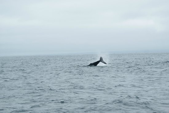 Randy's Fishing Trips and Whale Watching Trips: breaching whale