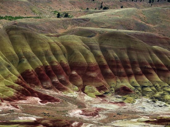 John Day Fossil Beds National Monument : Looks like fingers and toes.