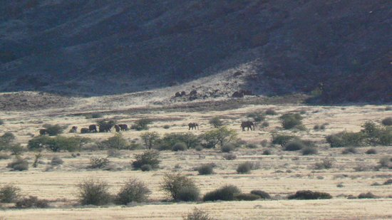 Twyfelfontein Country Lodge : Look for the elephants!