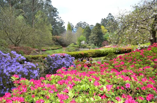 National Rhododendron Gardens: Spring