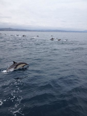 Dana Point, Kalifornien: Tons of dolphins in a pod