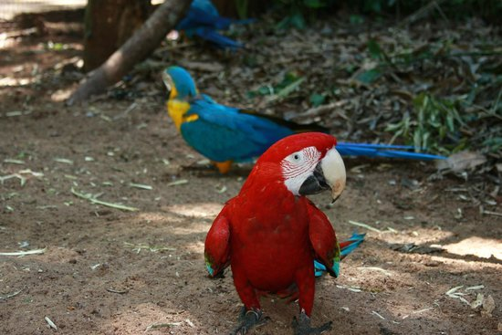 Belmond Hotel das Cataratas : парк птиц