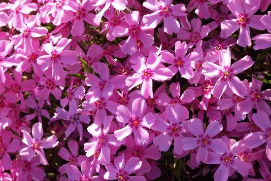 押し花を作ろう!|3タイプの作り方と押し花に向いている花8選