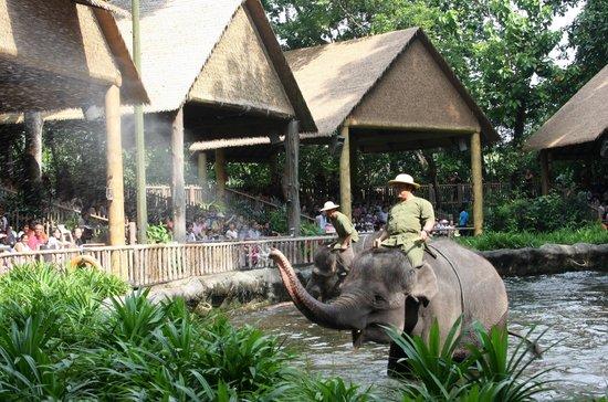Singapore Zoo : шоу слонов