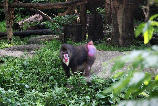 Singapore Zoo : Зоопарк