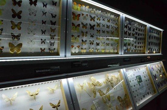 Entopia: @ Penang Butterfly Farm insectarium
