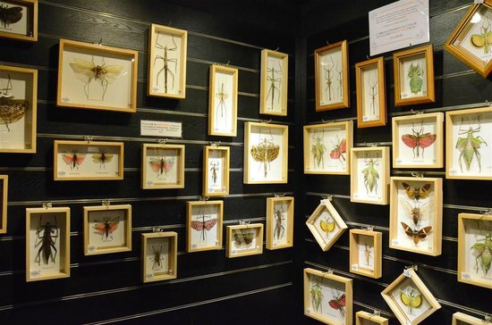 Entopia: mounted specimens of butterflies