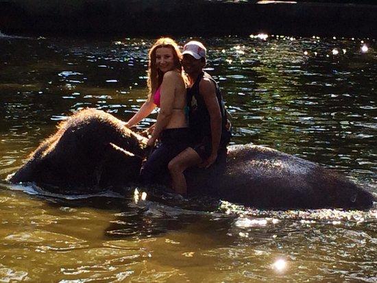 Elephant Safari Park & Lodge : Compartiendo con los  Elefantes en su piscina