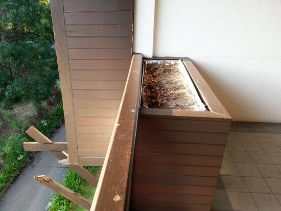 Century Langkawi Beach Resort : Rotten wood support and dried up planter box