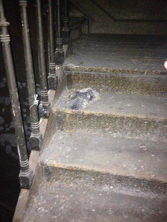 Hotel Saint Nicolas : Le pigeon mort!