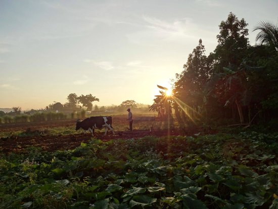 Casa Leyani y Osvedy : Lever du soleil depuis casa de Leyani y Osvedy