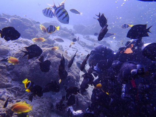 Aore Adventure Sports & Lodge: The Coral Garden at SS President Coolidge