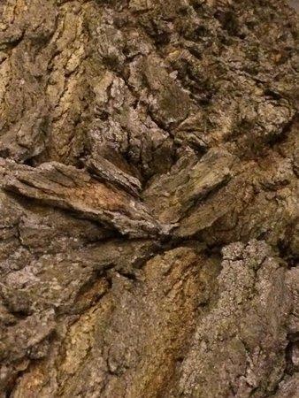 Ristorante della Rosa : Angels wings in the tree