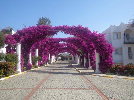 Kadikale Resort : 5 étoiles normes locales mais séjour agréable dans l'ensemble