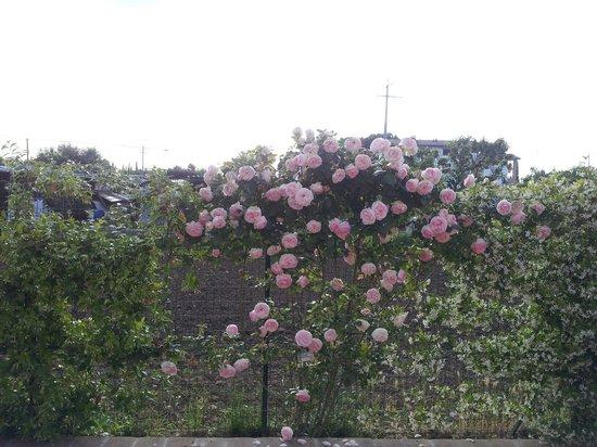B&B Laura : Le rose