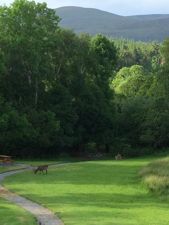 Friars Glen: View of the Killarney National Park from our bedroom window, with a couple visitors.