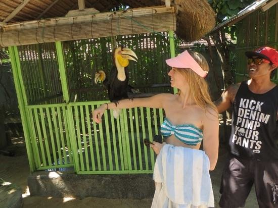 Turtle Conservation and Education Center: Hornbill