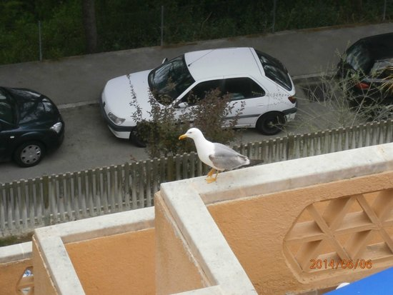 Club Santa Ponsa: Un invité sur le balcon en dessous de notre terrasse