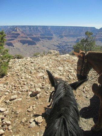 Grand Canyon Mule Tours by Xanterra: Mule Rim