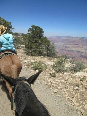 Grand Canyon Mule Tours by Xanterra : Mule Rim