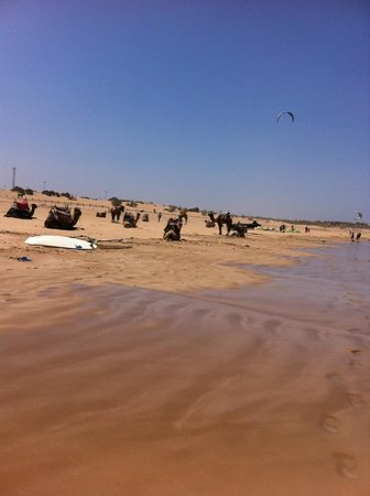 Essaouira Beach: camel and horse riding