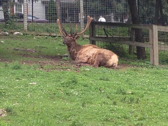ZooAmerica North American Wildlife Park: wow