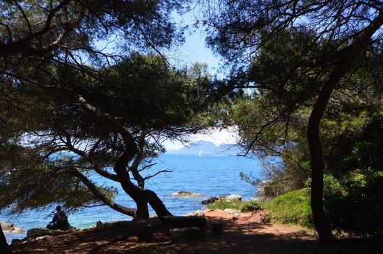 Îles de Lérins : A l'ombre des pins