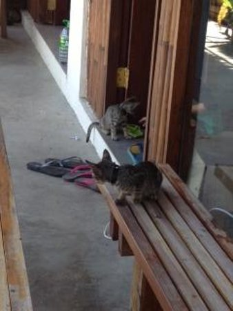 Artista Beach Villas: 2 kittens with parent you can see at the tuktuk road