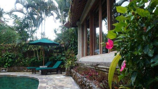 The Royal Pita Maha: とある日の朝、お庭にハイビスカスが咲いてました!
