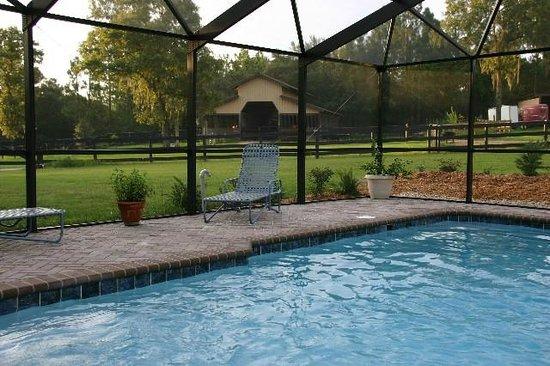 Lady Hawk Farm : The pool is solar heated